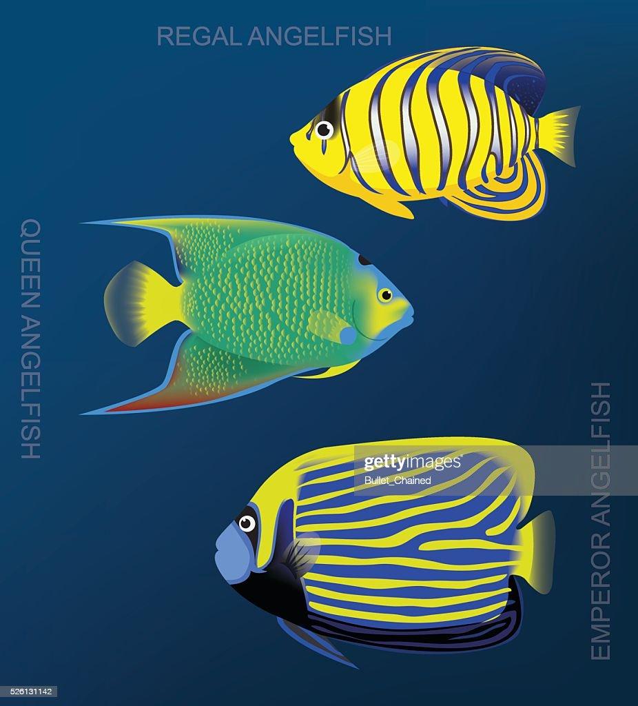 Reef Angelfish Set Cartoon Vector Illustration