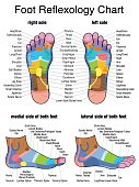 Reflexology Plantar Sole Profile Feet