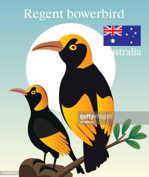 regent boverbird - uluru stock illustrations