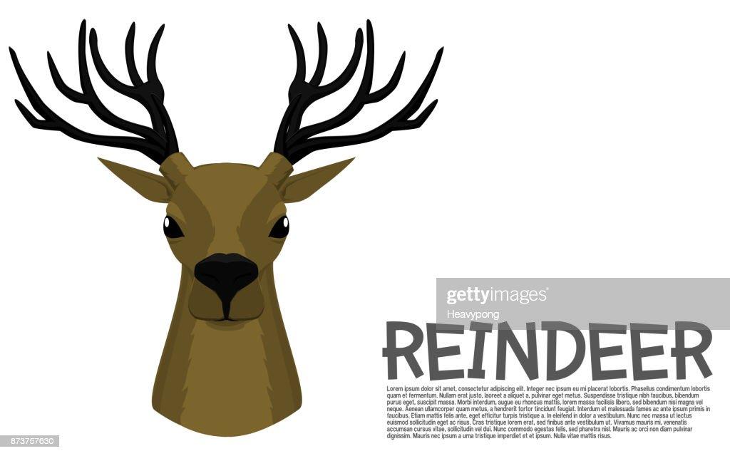 Reindeer front view