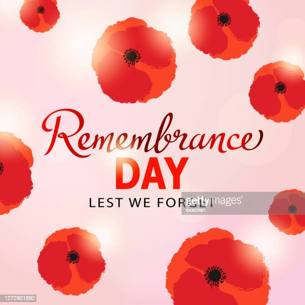 remembrance day poppy flowers - remembrance sunday stock illustrations