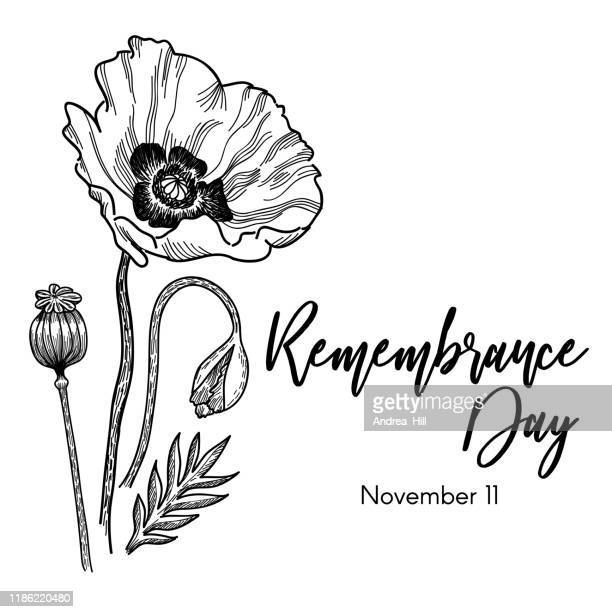 remembrance day tribute with poppy ink sketch vector illustration - poppy stock illustrations
