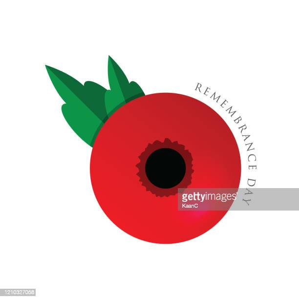 remembrance day vector card, banner anzac day. stock illustration - poppy stock illustrations