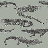 Reptile Rpt