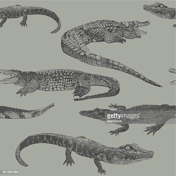 reptile rpt - alligator stock illustrations, clip art, cartoons, & icons