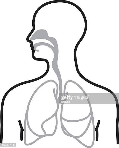 ilustraciones, imágenes clip art, dibujos animados e iconos de stock de sistema respiratorio - sistema respiratorio