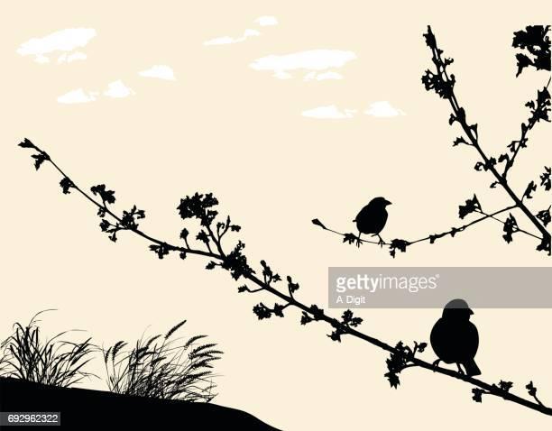ilustrações de stock, clip art, desenhos animados e ícones de resting branches breeze - canto de passarinho