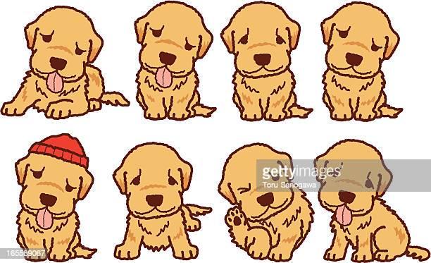 Illustrations et dessins anim s de golden retriever getty images - Dessin golden retriever ...