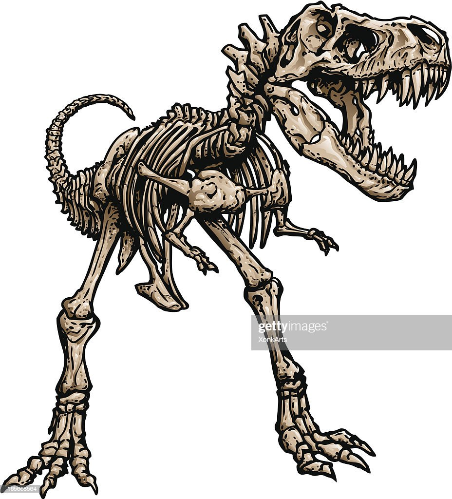 T Rex Skeleton : stock illustration