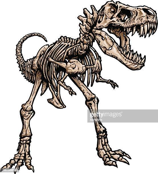 t rex skeleton - animal skeleton stock illustrations, clip art, cartoons, & icons