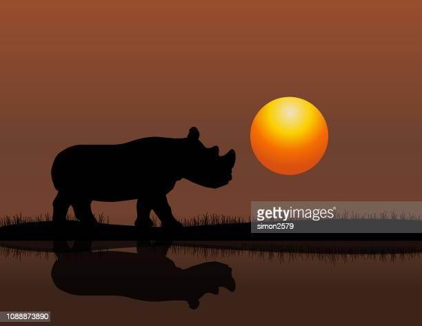 Rhino bei Sonnenuntergang Hintergrund