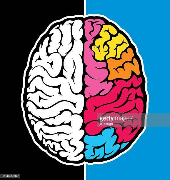 right brain - cerebral hemisphere stock illustrations, clip art, cartoons, & icons