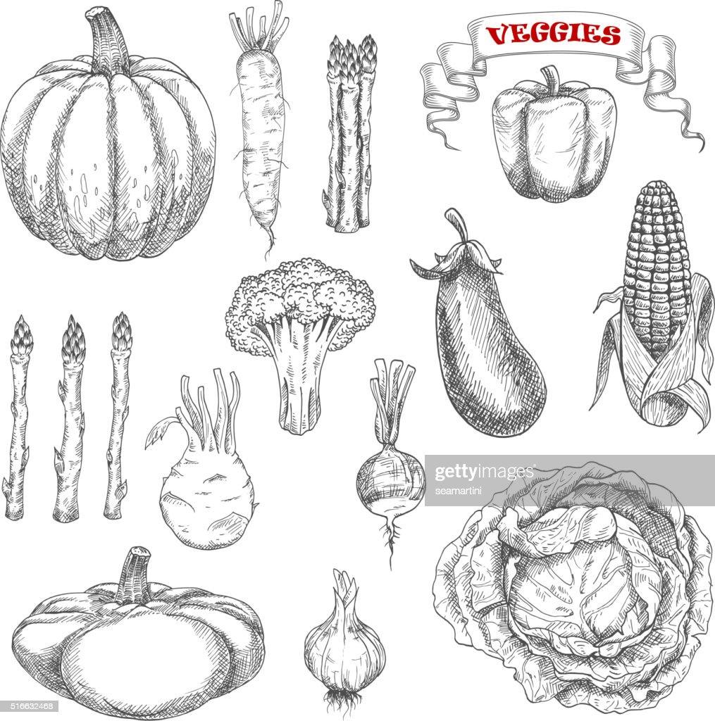 Ripe farm vegetables sketches set