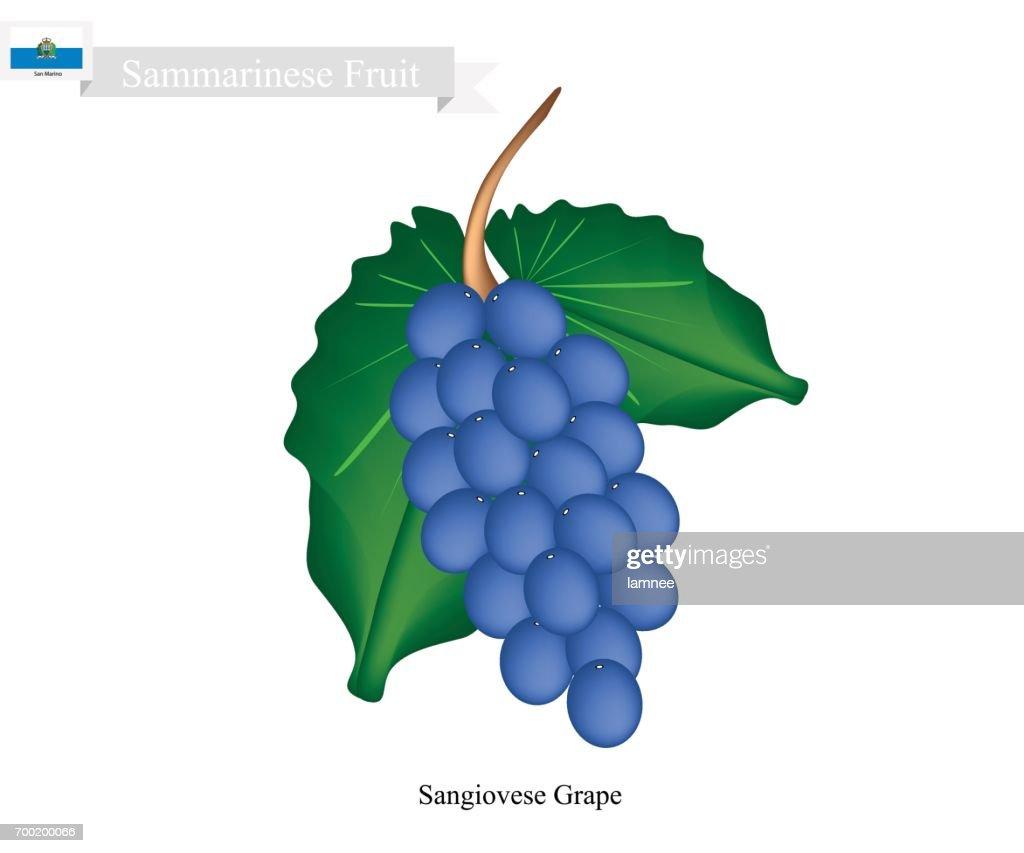 Ripe Grape Popular Fruit in Yemen