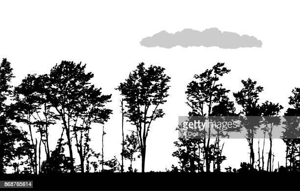 60 Top Aspen Tree Stock Illustrations, Clip art, Cartoons ...