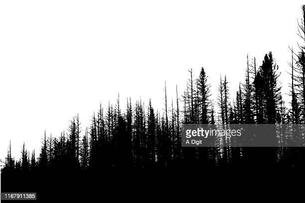 roadside winter trees - treelined stock illustrations