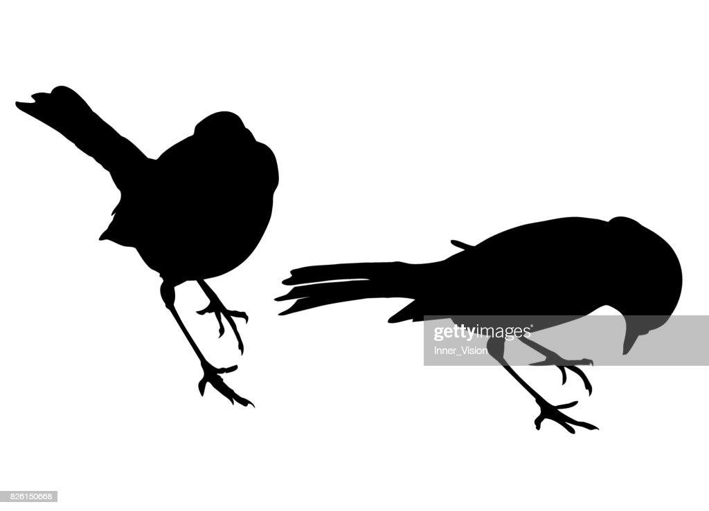 Robins - Two Shape Vectors
