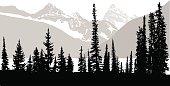 Rocky Mountain Trees