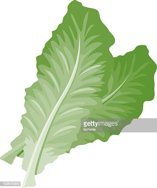 romaine lettuce - lettuce stock illustrations