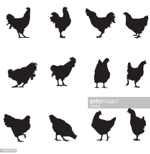 Rooster and Chicken Silhouette