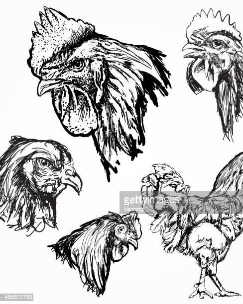 ilustrações, clipart, desenhos animados e ícones de galo de frango e rascunhos - cockerel