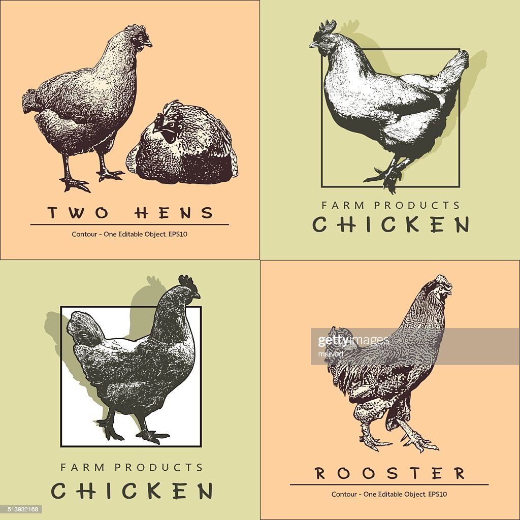 Rooster, Cockerel,  Chicken, Hen in Engraved Style.