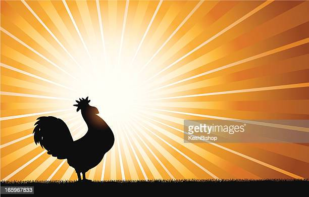 Rooster Crowing at Dawn Background