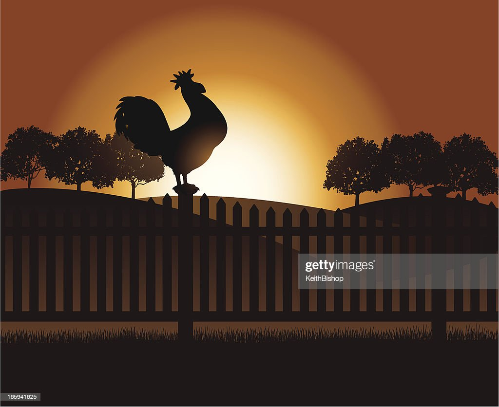 Rooster Crowing at Dawn