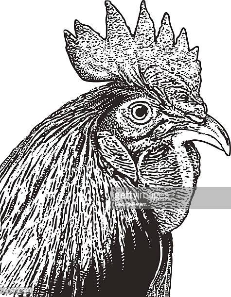Rooster Head Engraving