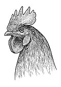 Rooster head portrait illustration, drawing, engraving, ink, line art, vector