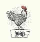 Rooster in graphic style, hand drawn illustration. Vector
