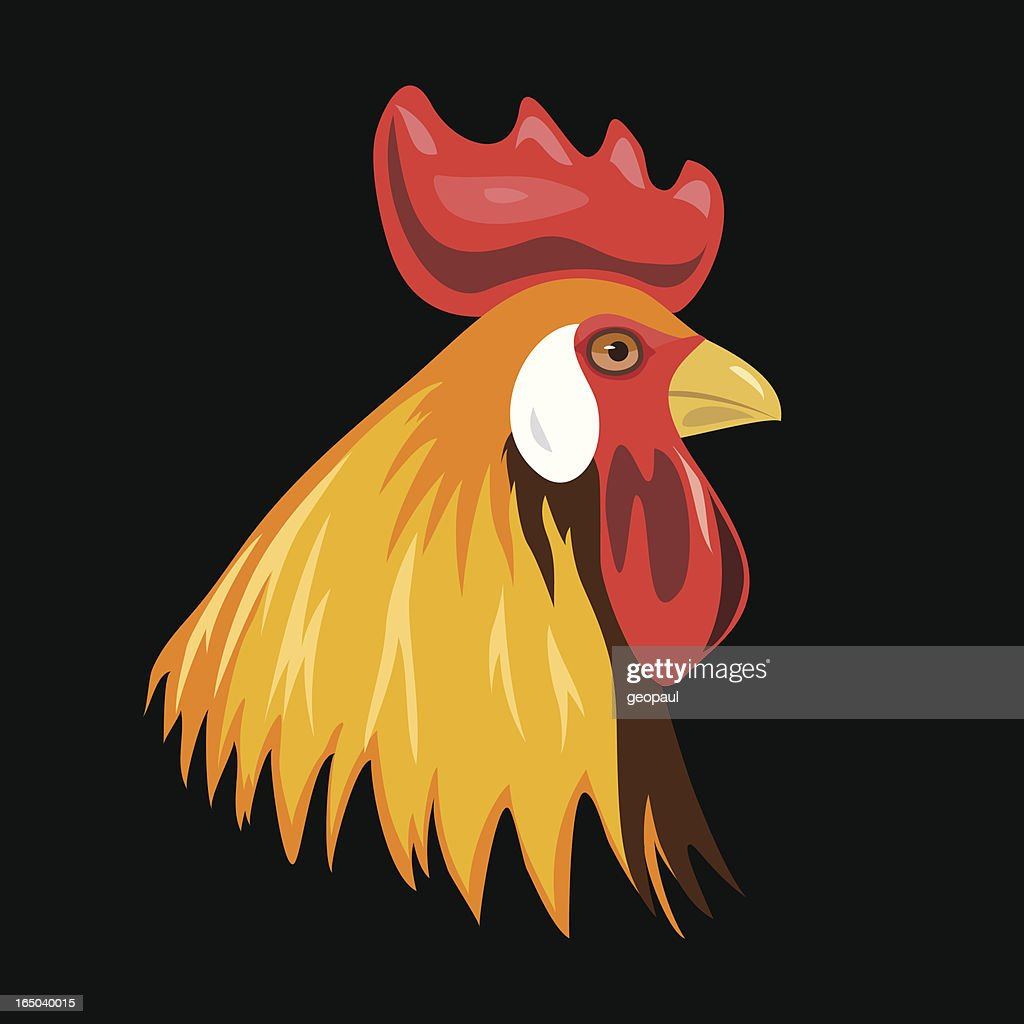 Rooster - vector