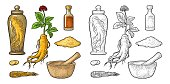 Root and leaves panax ginseng. Vector engraving black illustration