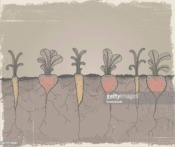 root vegetable garden - root stock illustrations, clip art, cartoons, & icons