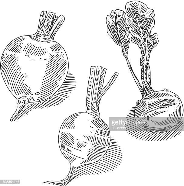 root vegetables drawing - turnip stock illustrations, clip art, cartoons, & icons