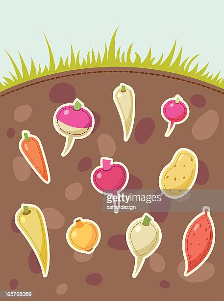 root vegetables grows under the ground - parsnip stock illustrations, clip art, cartoons, & icons