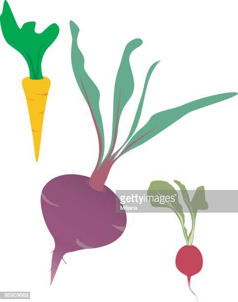 root vegetables - common beet stock illustrations, clip art, cartoons, & icons