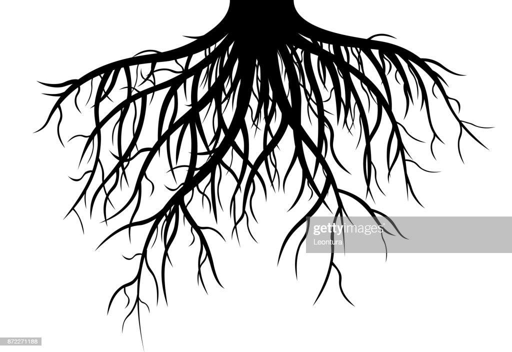 Roots : stock illustration
