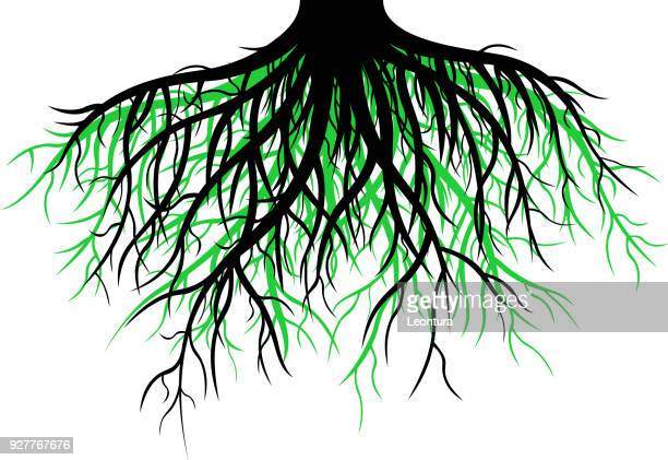 roots - root stock illustrations, clip art, cartoons, & icons