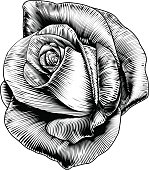 Rose Flower in Engraved Etching Woodcut Style