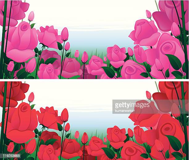 rose garden - plant stage stock illustrations, clip art, cartoons, & icons