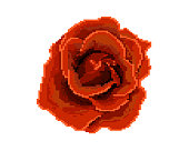 Rose icon. Pixel art. Logo of the flower shop.