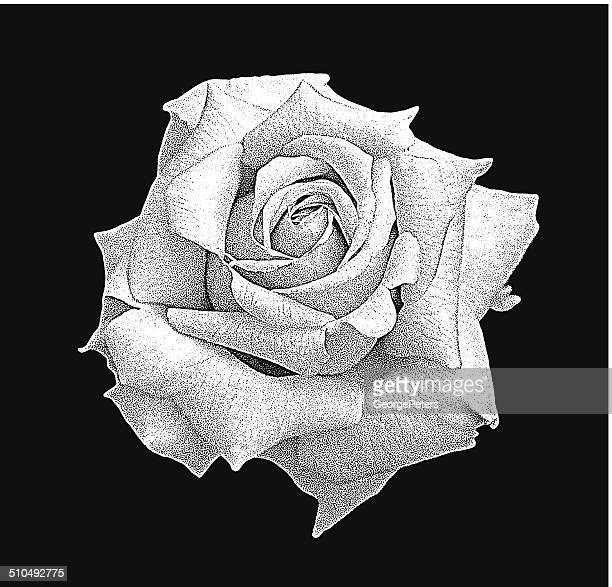 rose isolated on white - rose petals stock illustrations, clip art, cartoons, & icons