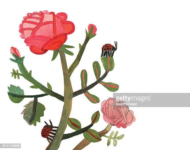 Rose plant and ladybird