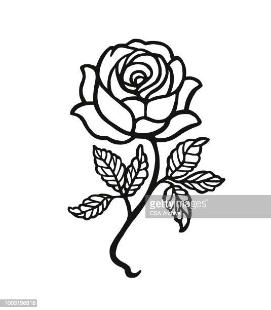 rose - rosa stock-grafiken, -clipart, -cartoons und -symbole