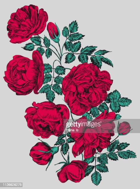 rose vector illustration, engraving . red flowers and buds - rosa stock illustrations