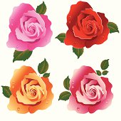 Rose's  In Four Colour's