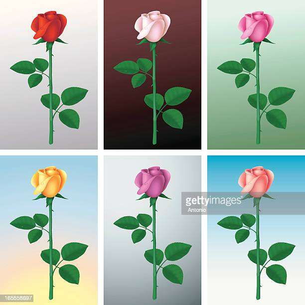 roses of six colors - plant stem stock illustrations, clip art, cartoons, & icons