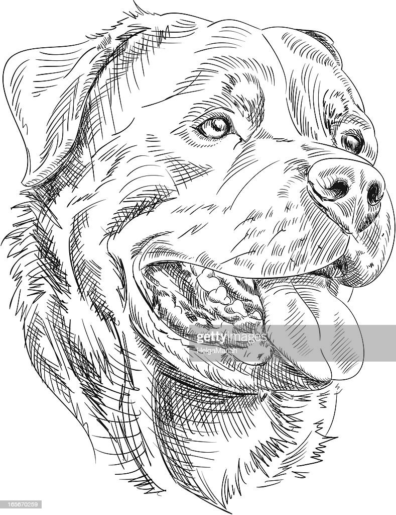 Rottweiler Dog Drawing