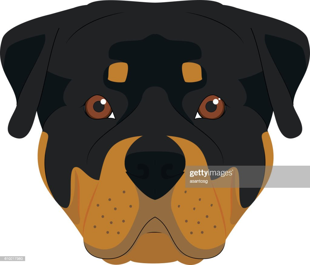Rottweiler dog isolated on white background vector illustration